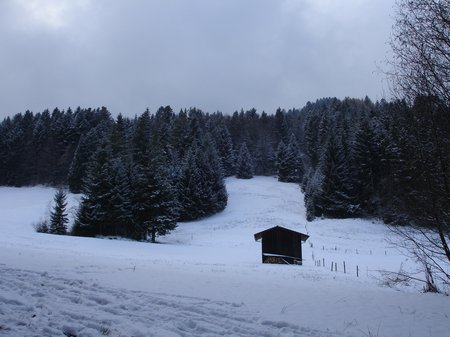 Novemberwald 022