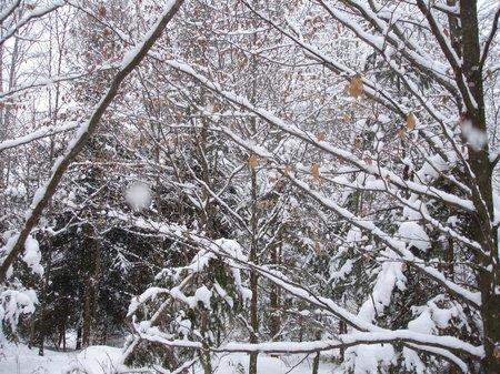 Winter2010 053