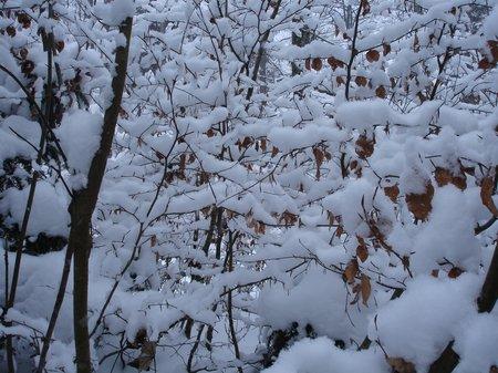 Winter2010 054