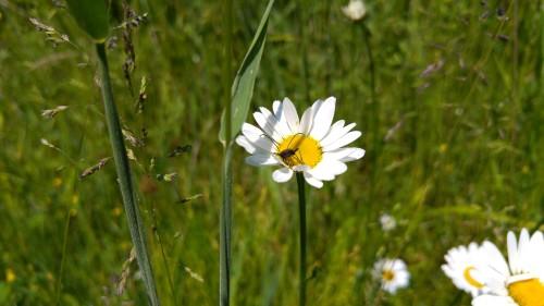 Auch die Insekten hatten Freude