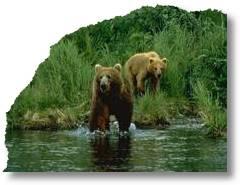 bear-d2